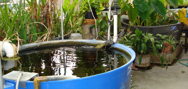 aquaculture system in a high school