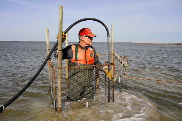 John Barnette uses water pump to drive poles into river bottom
