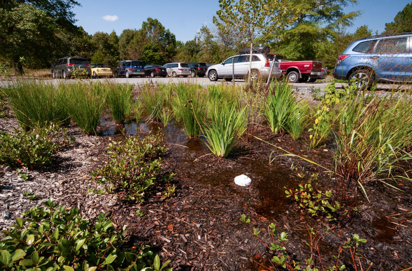 Adkins Arboreum parking lot garden