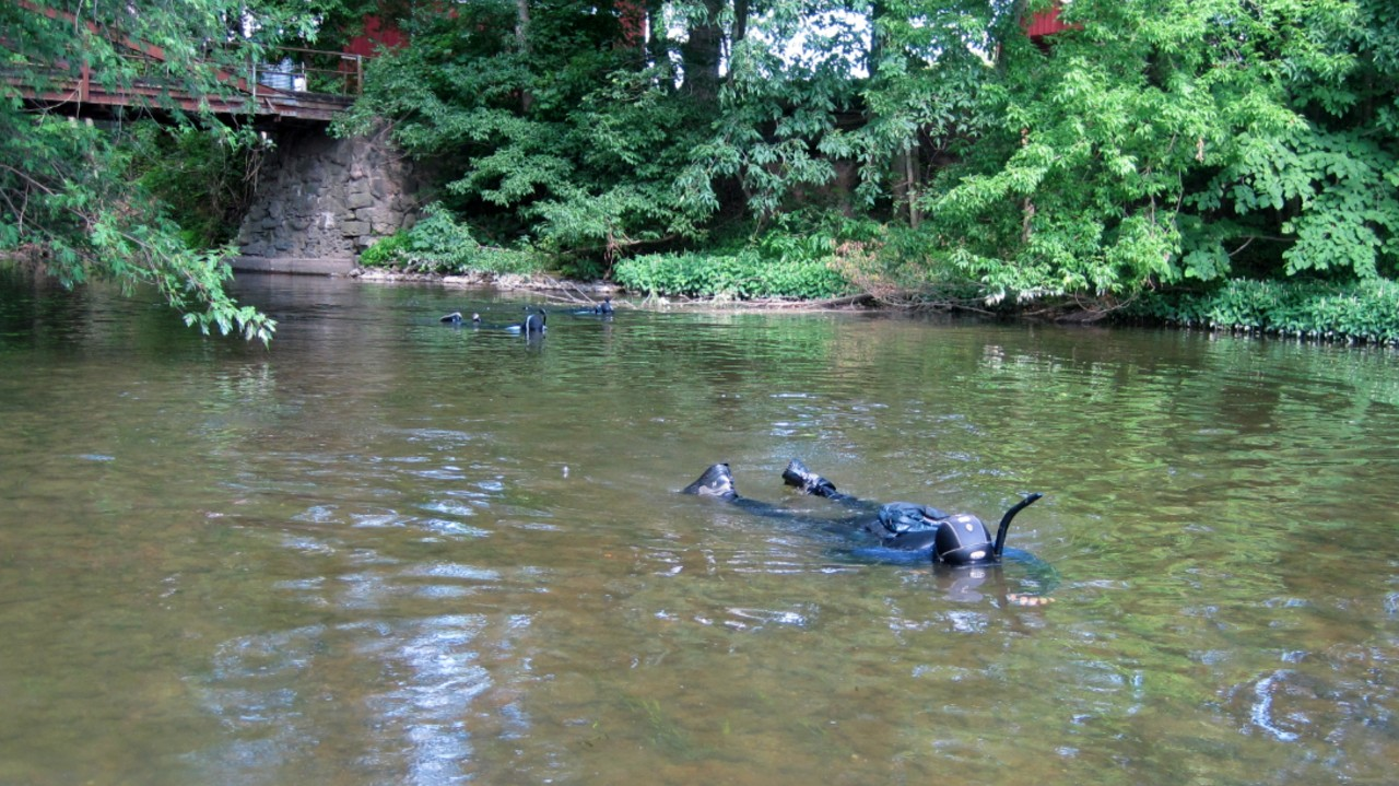 Researchers snorkel in a shallow creek