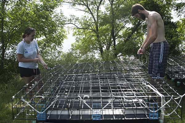 two oyster hatchery interns prepare an oyster growing cage for installation in the water