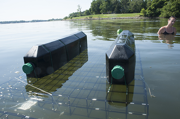 A floatign growing cage in its production orientation, with cago underwater and floating pontoons on top