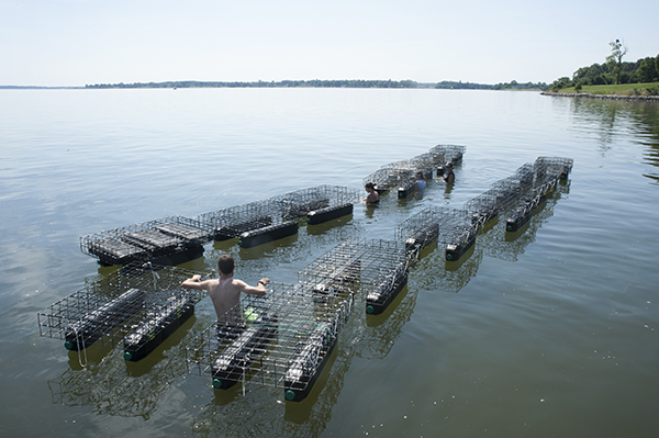 floating oyster cages secured to each other by rope