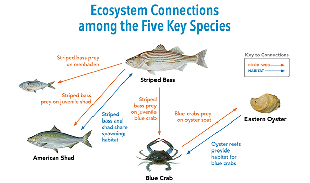 Ecosystem Connections among the Five Key Species