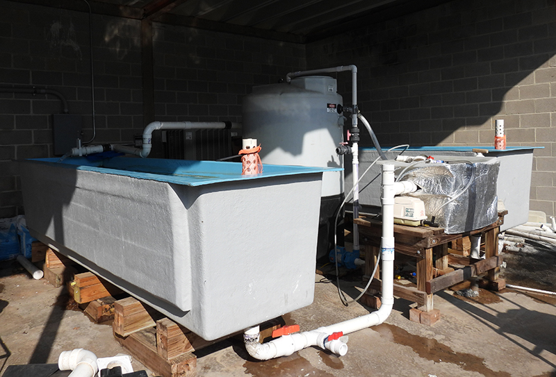 The 3,200-gallon double-tank system enabled students to successfully keep yellow perch outdoors over the winter.
