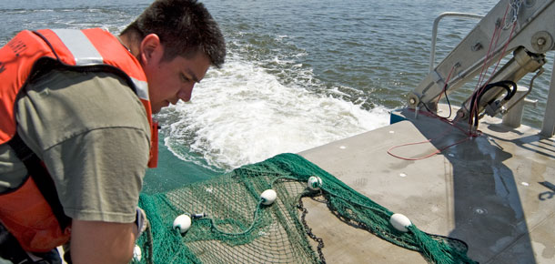 researcher gathering net