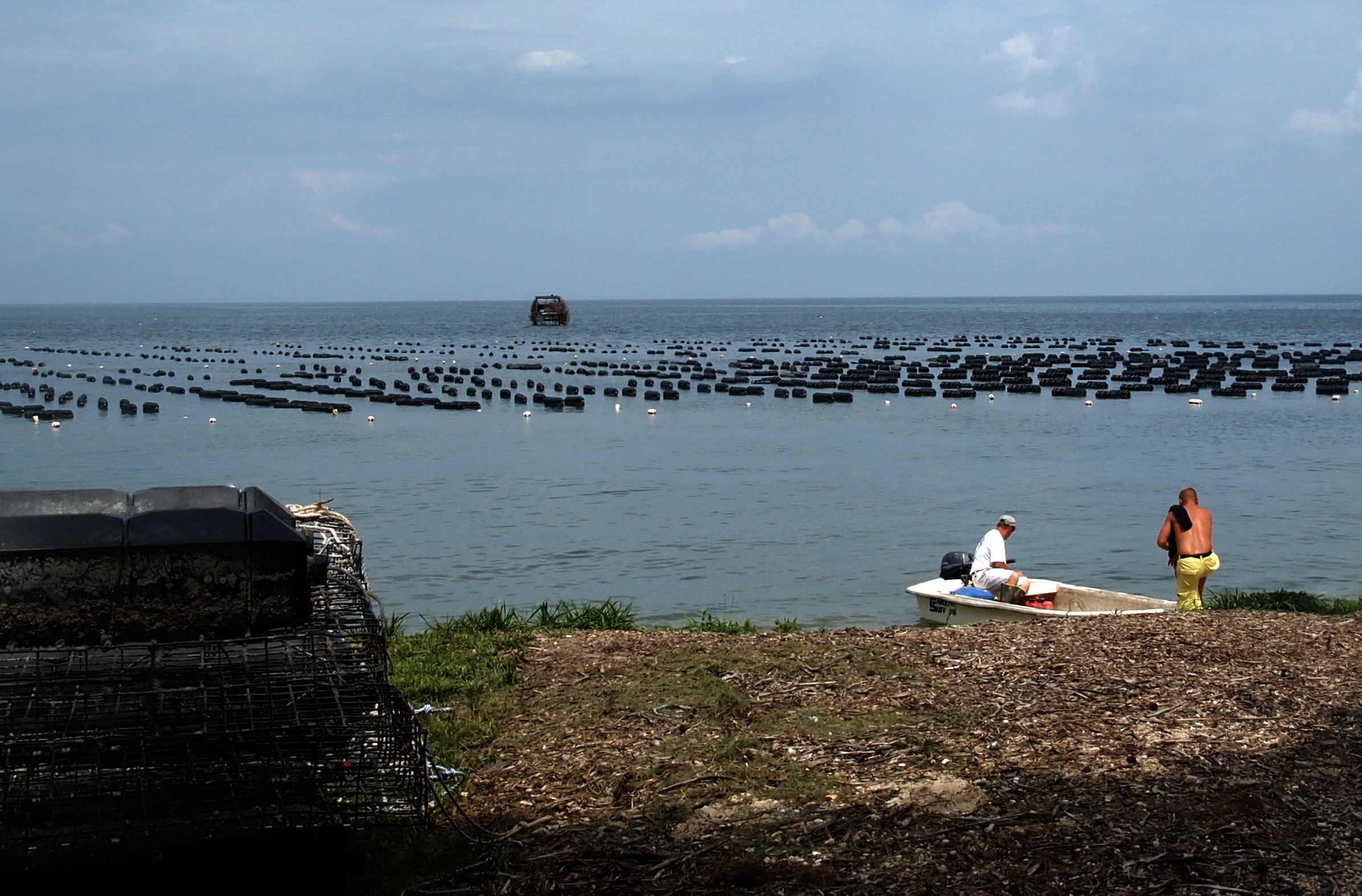Rainy Year In Maryland Doesn T Dampen State Oyster Aquaculture Forecast Maryland Sea Grant