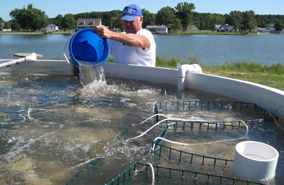 one waterman trying aquaculture in St. Mary's County