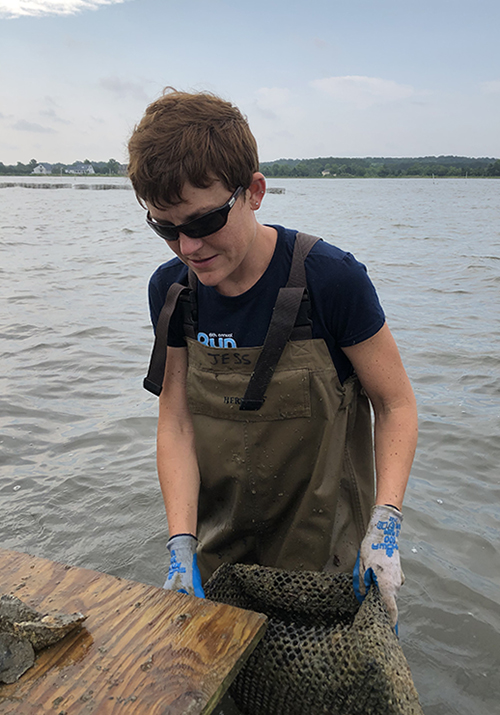 Jessica Small samples oysters at a field site to explore how well triploid oysters are surviving.