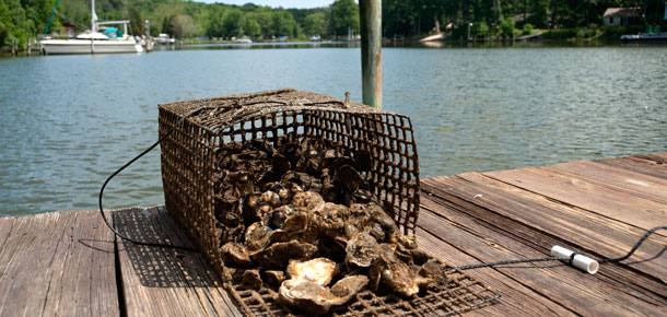 dock on the water with open cage of oysters