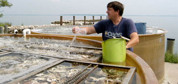 oyster tanks at hatchery