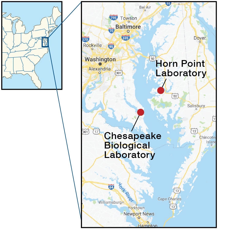 Chesapeake Bay map of REU locations