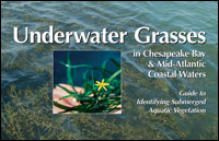 Underwater Grasses book cover