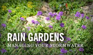 flowers in a rain garden