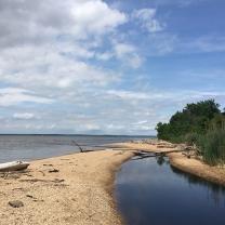 Image of the Chesapeake Bay coastline