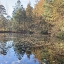 Seasonal changes on view at a small pond. Photo credit: Lisa Tossey / MDSG