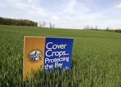 photo of field and sign advertising Maryland's cover crops program