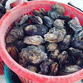 Year-round oysters is relatively new in the Chesapeake, but it's catching on. Photograph: Adriane Michaelis