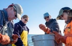 MDNR Shellfish Division surveying oysters