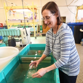Science teacher Judy Plaskowitz lowers some of the eggs into the indoor incubation tank.