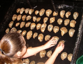 Stephanie Alexander placing oysters on a spawning table.