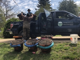 Jorge Bogantes Montero of the Anacostia Watershed Society loads the mussels up on Blue Jeans, the AWS' pickup truck, for transport to the Anacostia.
